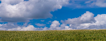 Corn and clouds pano, minnesota Stock Photography