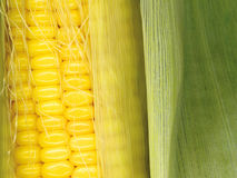 Corn clous up Stock Photos