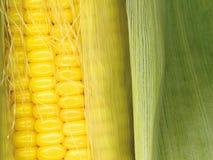 Corn clous up. Harvest backgrounds: clouse up of corn cop Stock Photos