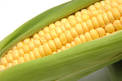 Corn in Cob 1 Royalty Free Stock Image