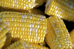 Corn on the cob. Tight shot of salt and pepper (yellow and white) corn on the cob Royalty Free Stock Photos