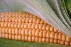 Corn on the cob. Sweet corn on the cob Royalty Free Stock Photos