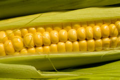 Corn cob. In green leaves Stock Photos