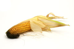 Corn on the cob. Isolated on a white background Stock Images