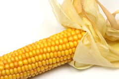 Corn on the cob. Isolated on a white background Stock Image
