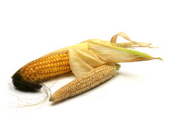 Corn on the cob. Isolated on a white background Stock Photos