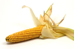 Corn on the cob. Isolated on a white background Royalty Free Stock Photography