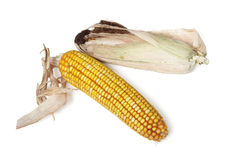 Corn-cob Royalty Free Stock Image