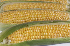 Corn On The Cob. Closeup of several corns on the cob royalty free stock photos