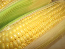 Corn in cob Royalty Free Stock Photography