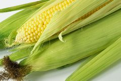 Corn on cob. Fresh corn cobs on white background Stock Image