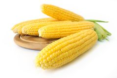 Corn on cob. Fresh corn cobs closeup on white background Stock Image