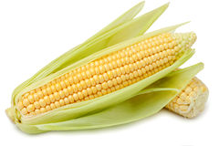 Corn on the cob. Fresh corn on the cob on a white background isolated royalty free stock image