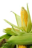 Corn on cob. Fresh corn cobs closeup on white background Royalty Free Stock Images