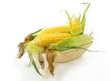 Corn on cob. Fresh corncobs in a basket on white background Stock Photography