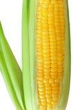 Corn Cob. A cob of corn isolated on white Stock Photos