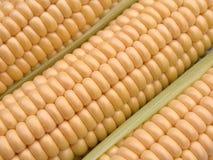 Corn-cob foto de archivo libre de regalías