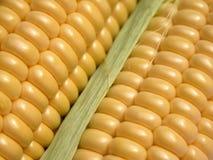 Corn-cob Foto de archivo