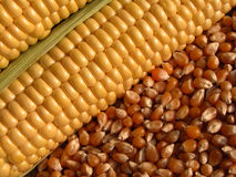 Corn-cob Stock Images