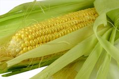 Corn on the cob. Fresh corn on the cob Royalty Free Stock Photos