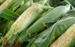 Corn on the cob. Pile of fresh corn on the cob Royalty Free Stock Photo