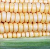 Corn on cob. Closeup of corn on cob Stock Photo