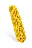 Corn Cob Royalty Free Stock Photo