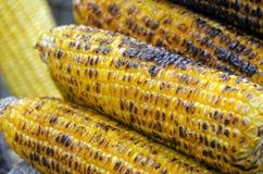 Corn Cob Royalty Free Stock Image