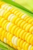 Corn cob Royalty Free Stock Photography