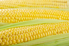 Corn cob Royalty Free Stock Photography