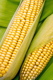 Corn on cob Royalty Free Stock Image