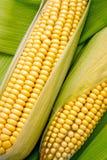 Corn on cob Royalty Free Stock Image
