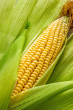 Corn and cob Royalty Free Stock Photos