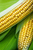Corn and cob Stock Photos