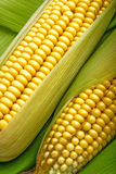 Corn and cob Royalty Free Stock Images
