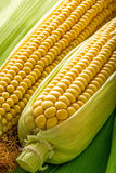 Corn on cob Stock Image