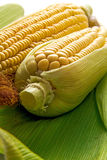 Corn and cob Stock Images