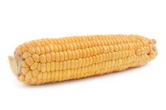 Corn in cob Stock Images