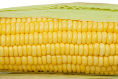 Corn cob Stock Images