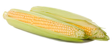 Corn cob. Two fresh corn cob on white background Stock Photo