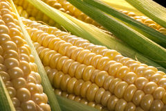 Corn on the cob. Is a culinary term used for a cooked ear of freshly picked maize from a cultivar of sweet corn. The ear is picked while the endosperm is in the