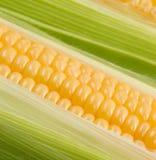 Corn cob. Close up of the corn cob Stock Photography