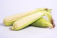 Corn on the Cob. Or maize with leaves on and peeled Stock Photo