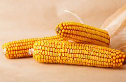Corn cob. Autumn food photo on yellow background Royalty Free Stock Photography