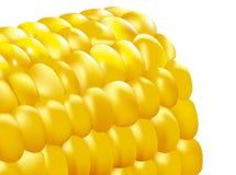 Corn cob. A 3D corn cob is creatived by AI Stock Photo