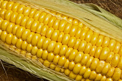 Corn on the cob. Royalty Free Stock Photography