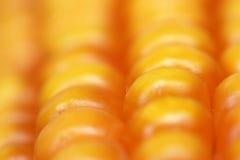 Corn-cob Photographie stock