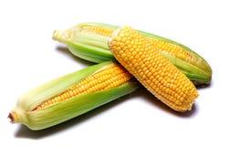 Corn cob Royalty Free Stock Photos