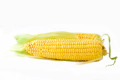 Corn on the Cob Stock Photo