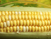 Corn on Cob. Close up with water drops Stock Photo